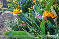 Flor Típica na Região