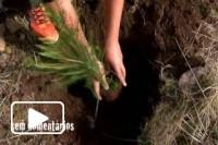 Cinco mil arvores plantadas na Madeira