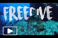 FREEDIVE - MADEIRA ISLAND