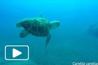Madeira Marine Fauna II